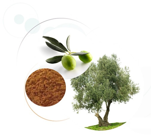 Olive polyphenols applications by GrapSud